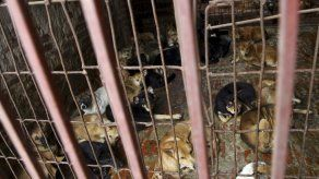 Hanói insta a sus residentes a dejar de comer carne de perro