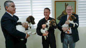 Francia dona a Cuba tres cachorros para detección de dinero y drogas