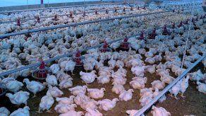 Anavip destaca incremento en la producción y consumo de carne de pollo y huevos en el 2018