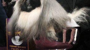 Perro pequinés gana título de Westminster