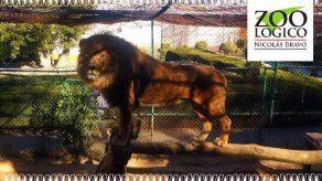 Empleado de zoo olvida cerrar recinto: lo mata el león