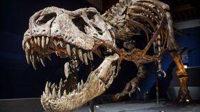 Estudio: Tiranosaurios usaban poco sus pequeños brazos