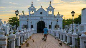 ¿Pacto con el diablo? Gatos cuidan tumbas en pueblo que inspiró a Gabo