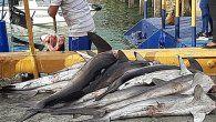 La embarcación Kembly III, fue aprehendida en mayo cuando realizaba faenas de pesca de especies prohibidas en la zona económica exclusiva al sur de Punta Coco, en el Golfo de Panamá.