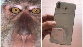 Mono se roba celular
