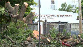 De acuerdo con el Minsa, la empresa encargada de la construcción del nuevo Hospital del Niño cuenta con un permiso para la tala de árboles en los jardines del Hospital Santo Tomás.