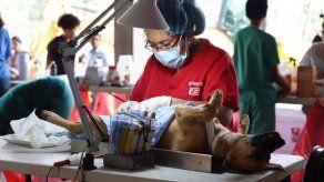 Realizarán jornada de esterilización de perros y gatos este sábado y domingo en Pedregal