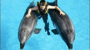 Delfines gordos a dieta en acuario de Japón