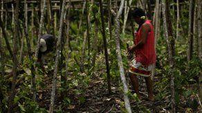 Indígenas panameños se convierten en profesores agrícolas por unos meses
