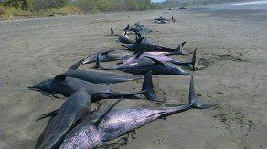 Encuentran decenas de delfines varados en playa de Tonosí