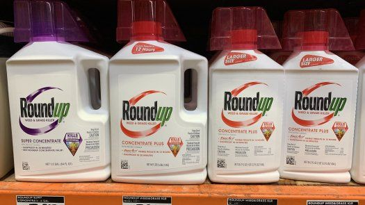 Hardeman, de 71 años y que entre 1980 y 2012 utilizó de forma frecuente el pesticida, que se comercializa bajo la marca Roundup de Bayer, contrajo cáncer en la sangre.