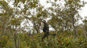 Perú erradicó 20.263 hectáreas de cocales ilegales en lo que va de año