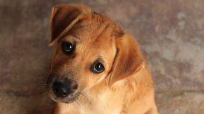 ¿Cómo quitarle el miedo a un perro cuando ha sido maltratado?