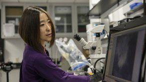 Estudio sobre telarañas podría llevar a mejores materias