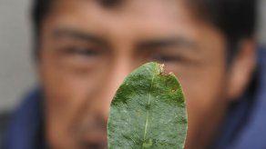 Colombia erradicó 15.000 hectáreas de coca el año pasado en suroeste del país