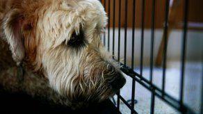 Iniciativa que crea el Programa Municipal de Bienestar Animal aprobada en tercer debate