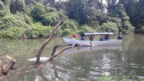 Encuentran muertos dos delfines que quedaron atrapados en río de Chiriquí