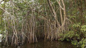 MiAmbiente suspende consulta pública para extender límites del Humedal San San Pond Sak