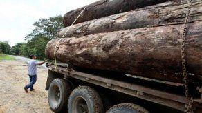Decomisan millonaria carga de cotizada madera con destino a China