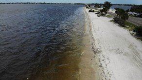 Hallan muertos nueve delfines en costas afectadas por marea roja en Florida