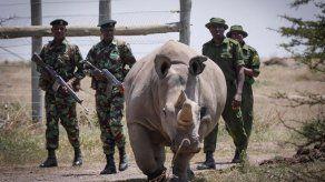 Países mantienen prohibición comercio de rinocerontes blancos y sus cuernos