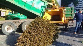 AAUD habilitará puntos de acopio para recolección de arbolitos de Navidad