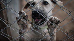 Lo qué hay detrás de un maltratador de animales