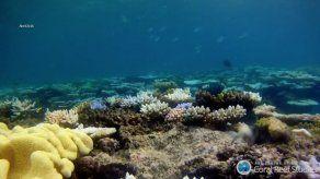 Corales blanqueados durante dos años consecutivos están condenados