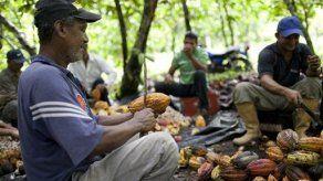 Cooperativa de Cacao Bocatoreña busca mejoras en la planta de producción