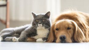 ¿Cómo hacer que los perros y gatos convivan dentro de la casa?