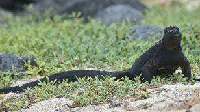 Galápagos: Multa de 15.500 dólares por atropellar a iguana