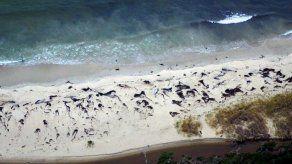 Hallan unas 70 ballenas muertas en sur chileno