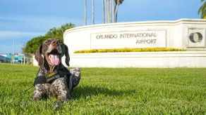 Aeropuerto de Orlando sobrepasa los 50 millones de pasajeros en doce meses