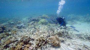 Congresistas de EE.UU. buscan actualizar la ley de protección de arrecifes