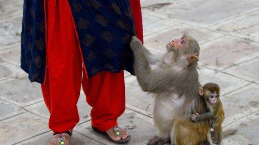 Mujer alimenta a diario a monos en templo en Nepal