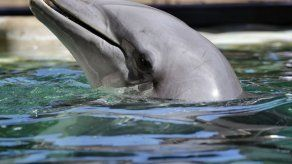 Reubican en el Caribe a 4 delfines de Arizona