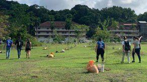 Unos 100 plantones se sembraron en el Parque de Los Lagos en Ciudad del Saber.