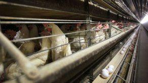 Panamá exportará carne avícola a China