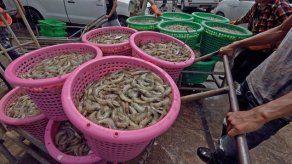 El 11 de octubre culmina el segundo período de veda de camarón