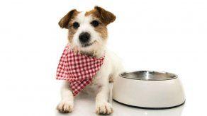 ¿Tu perro se volvió quisquilloso con sus croquetas?