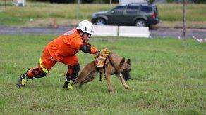 Unidad de Búsqueda y Rescate Canino del Sinaproc inicia curso para fortalecer capacidades