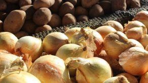 Panamá importará 25 mil quintales de cebolla para evitar desabastecimiento