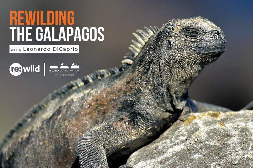 La Dirección del Parque Nacional Galápagos junto a estos grupos de apoyo