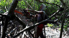 La lucha por sobrevivir que se libra en un manglar del Pacífico de Panamá