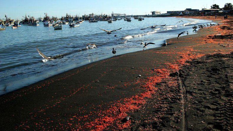 Nueve de cada diez playas en Chile no son aptas para el baño