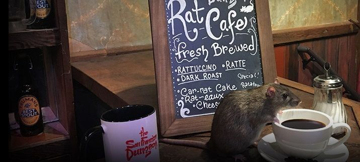 Abre en San Francisco un café temático con ratas