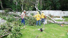 Alcaldía de Panamá da a conocer requisitos para solicitar permiso para poda y tala en la capital