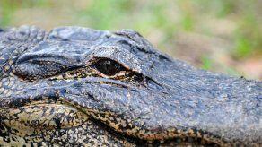 MiAmbiente señalizará áreas donde habitan cocodrilos tras ataque de reptil a menor en Coclé