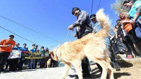 Obsequian a Evo Morales un perro rescatado en un deslizamiento en La Paz