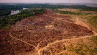 La deforestación de estos dos periodos superó por primera vez desde 2008 los 10.000 km2 y eso podría ocurrir ahora nuevamente si la reducción se limita al 5% (serían 10.308 km2).